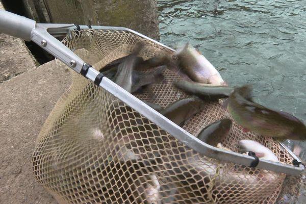 Pisciculture de l'Estrigon à Campet-et-Lamolère dans les Landes. Il ne reste plus que quelques truites dans les bassins, les autres ont filé dans les cours d'eau.