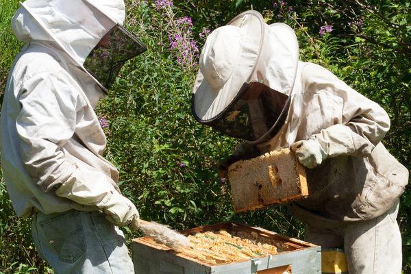 Printemps 2020 : la récolte de miel s'annonce conséquente en Auvergne.