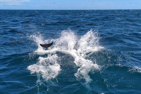 Les dauphins dont nous parle Ivan.