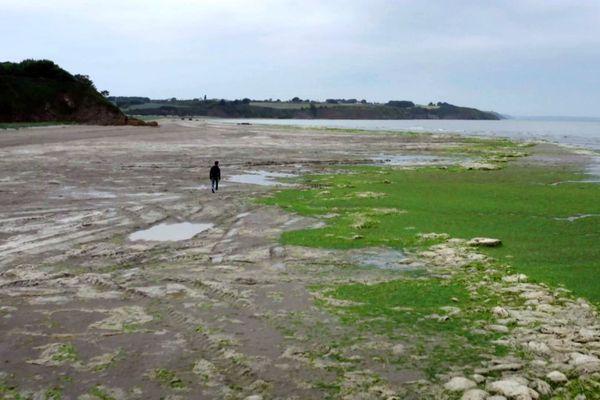 Les algues vertes, une problématique à laquelle la Bretagne est confrontée