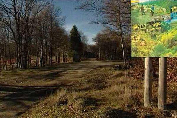 Les responsables politiques souhaitent aménager un parcours de découverte du site sur le mont Aigoual.