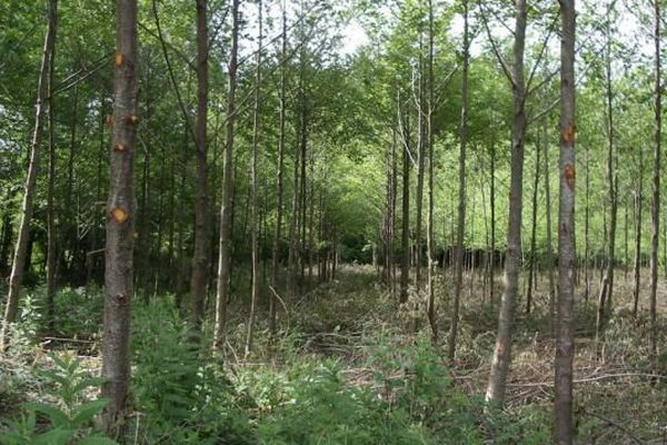 Forêt du plateau de Millevaches