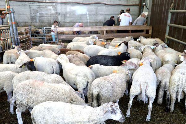 Un abattoir temporaire sera ouvert cette année encore à Saint-Martin-Bellevue, en Haute-Savoie afin que les fidèles puissent faire abattre un mouton pour l'Aïd El-Adha.
