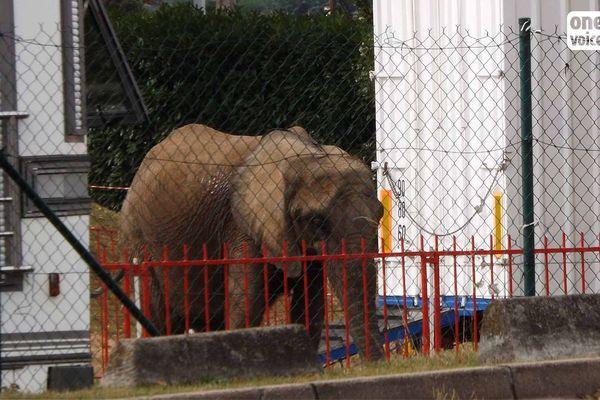 L'éléphante Samba, rebaptisée Tania, n'aura pas droit à sa retraite au sanctuaire de Bussière-Galant en Haute-Vienne.