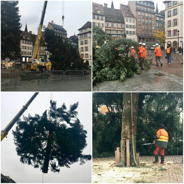 Les équipes techniques de l'ONF ont beaucoup plus de travail cette année : aujourd'hui, débitage du deuxième arbre, avant l'installation du troisième dimanche.