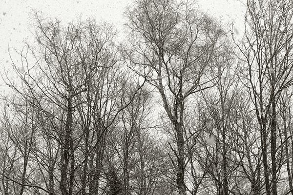 Premiers flocons de neige.