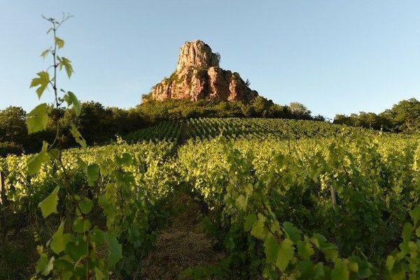 Des vignes près de la Roche de Solutré, en Saône-et-Loire