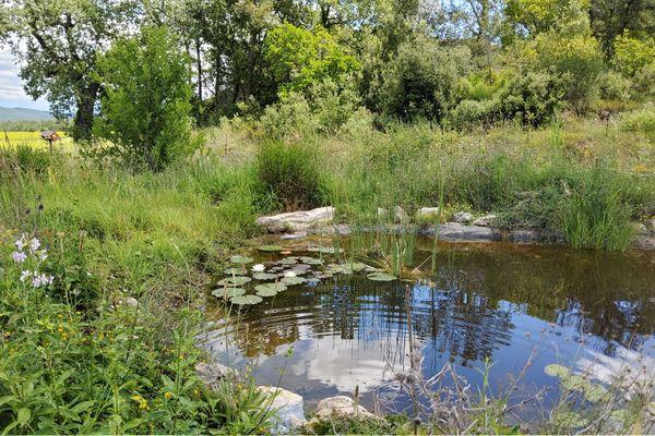 Le jardin à papillons du domaine de l'escarelle (La celle, 83). Agnes Garcin-Dupoyet