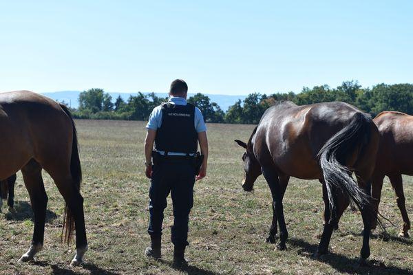 Illustration. Une enquête a été ouverte, ce lundi 7 septembre, après différents cas de mutilation de chevaux dans le Loiret.