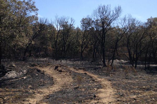 Balagne : l'incendie qui s'est déclaré le 25 juillet dans la plaine du Reginu est maîtrisé