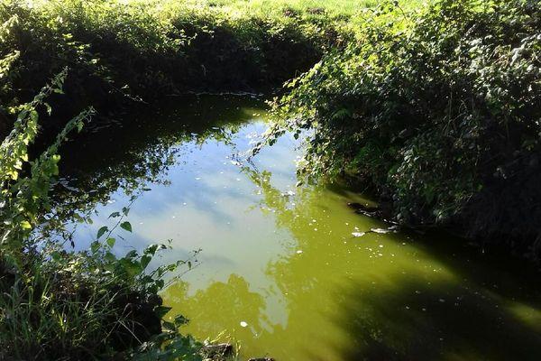 le ruisseau La Boissière à Ploudiry ce matin