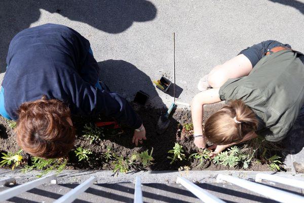 Les mains dans la terre, premières plantations le long d'un mur dans les rues de Clermont-Ferrand