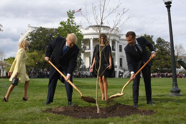 L'arbre, un cadeau diplomatique de la France, provenait des bois Belleau où les forces américaines ont perdu en juin 1918, 9.777 hommes lors de la Première Guerre mondiale.