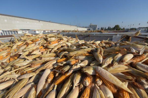 Pour l'été et l'automne 2021, le semencier Limagrain recrute de nombreux saisonniers.
