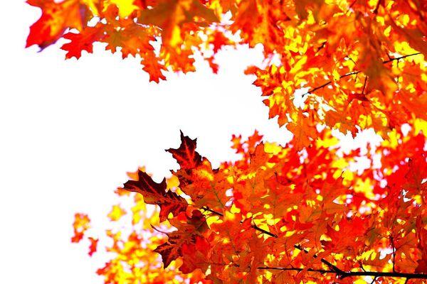 L'automne en couleur