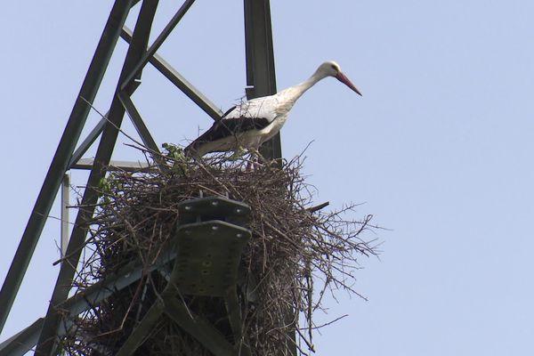 Une cigogne dans son nid