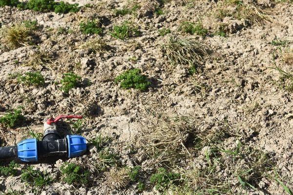 La Vienne a été placé en alerte orange pour la sécheresse.