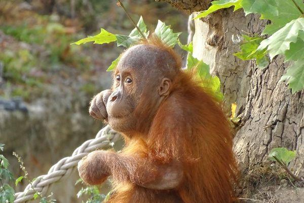 Une telle naissance en captivité est rare, selon le parc.