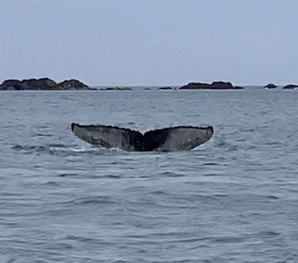 La baleine à Paimpol