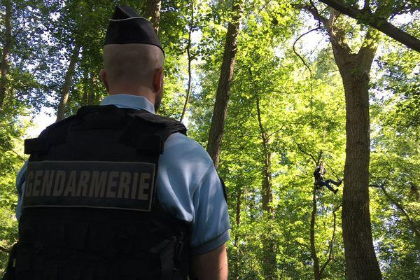 C'est sous la surveillance des gendarmes que l'écologue est intervenue sur certains arbres de la forêt de Kolbsheim, mandatée par Arcos, en charge des travaux.