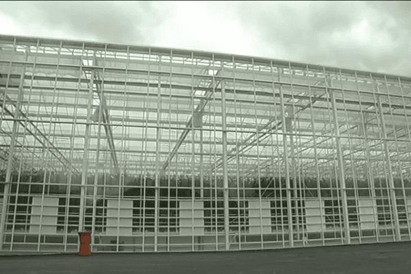 Une cathédrale de verre pour cultiver des tomates.