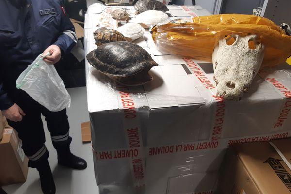 Les crânes et objets retrouvés chez le collectionneur.