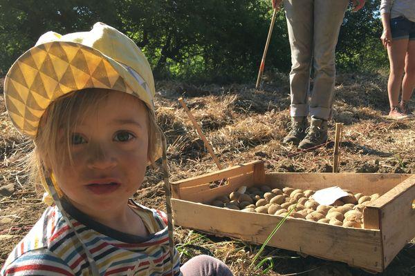 Il n'y a pas d'âge pour planter des patates. Marika, deux ans et demi était dans les champs dès 9 heures ce samedi matin 30 mai.