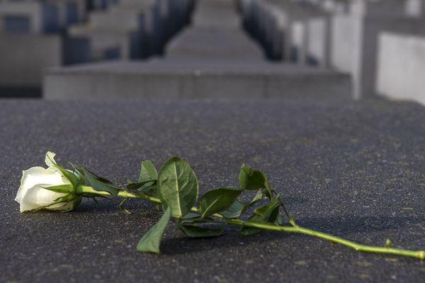 Illustration. Une rose blanche posé sur l'une des tombes du mémorial des victimes de l'Holocauste à Berlin.