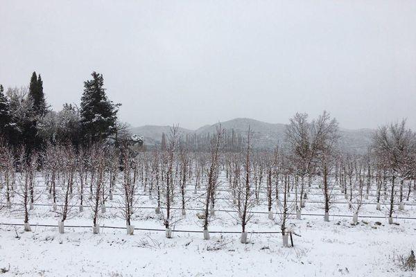 La neige est tombée en plaine, comme ici à Ille-sur-Têt dans les Pyrénées-Orientales