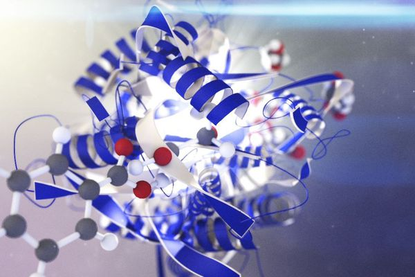 La société Carbios, située à Clermont-Ferrand,a développé deux bioprocédés industriels dans le domaine de la biodégradation et du biorecyclage des polymères.