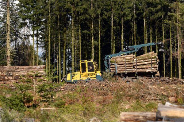 Travaux forestiers dans une parcelle de forêt ravagée par les scolytes dans le massif vosgien entre les Vosges et la Haute-Saône, la plus grande partie sinistrée par ces insectes tueurs d'épicéas dans les régions Grand-Est et Bourgogne Franche-Comté.