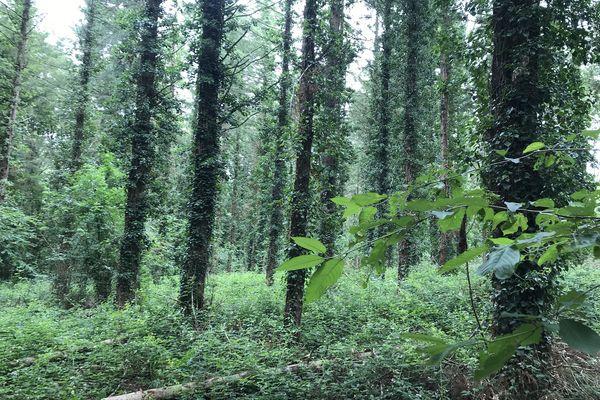 La forêt du Domaine de Land Rohan est exploitée et gérée en sylviculture douce