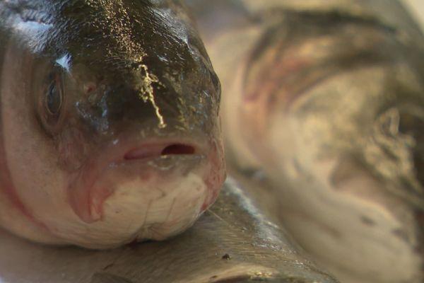 Malgré les prix en hausse, le poisson a toujours autant de succès en Normandie pour les fêtes