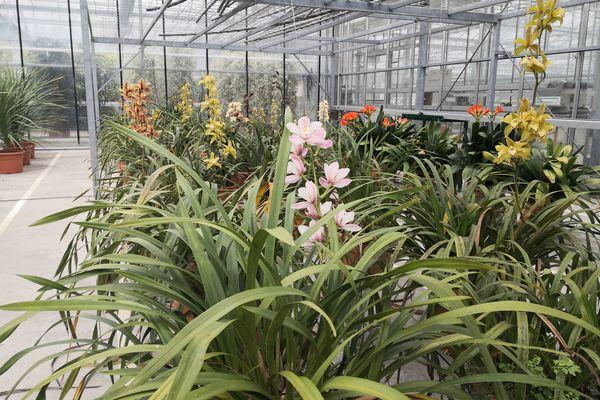Les plantes et fleurs sont réparties dans compartiments, au centre horticole de Rennes. Elles participeront à l'aménagement paysager de la ville ou seront dédiées à l'organisation d'événements (sportifs, commémorations, tournages de films...)