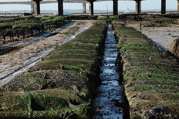 Parcs à huîtres de Bourcefranc-le-Chapus en Charente Maritime
