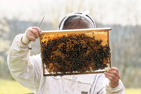 De nombreuses colonies sont mortes à cause du froid du printemps de cette année 2021.