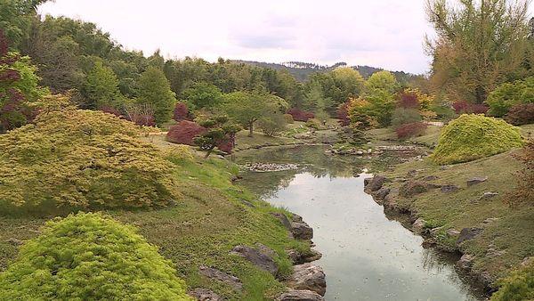 Le jardin japonais de la bambouseraie d'Anduze, tout en harmonie zen, nécessite une attention permanente.