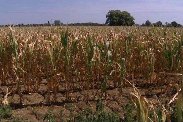 Les conséquences de la sécheresse sur les récoltes de soja et de maïs inquiètent les agriculteurs.