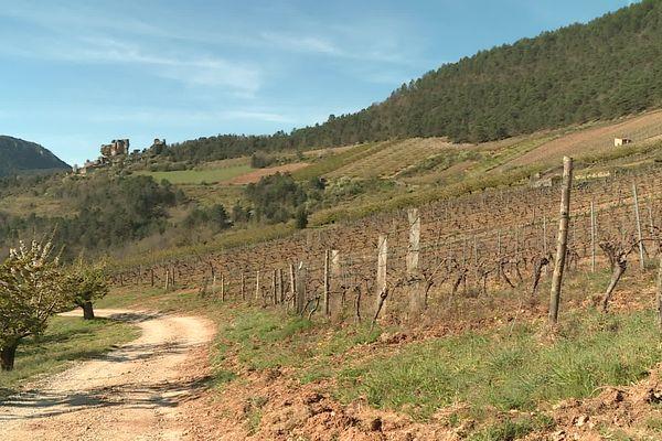 Domaine du Vieux Noyer- Côtes-de-Millau dans le département de l'Aveyron là ou est produit et distribué un alcool à base de vin et de CBD.