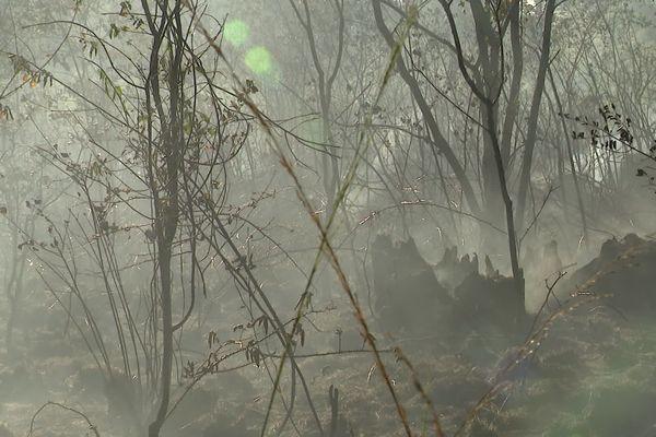 Un hectare de forêt est parti en fumée ce vendredi soir. Une quarantaine de pompiers du SDIS 86 étaient sur place pour éviter l'embrasement du reste de la parcelle.
