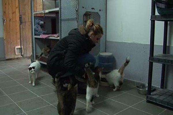 Les chats sont deux fois plus nombreux que les places prévues à la chatterie.