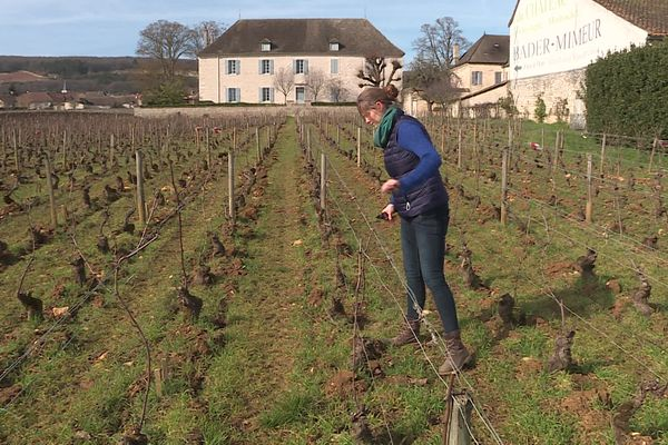 Pour les vignerons, des périodes de gel après la sortie des bourgeons seraient dévastatrices.
