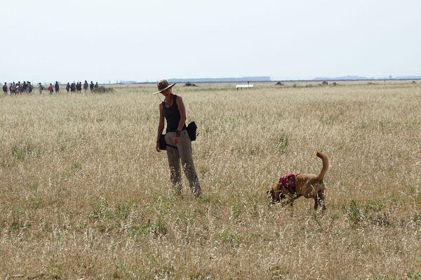 Démonstration de recherche d'espèces animales menacées par la dresseuse Rita Santos et sa chienne Hera