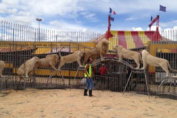 Le cirque Pinder s'installe à Metz ce Weekend, trois représentations sont prévues