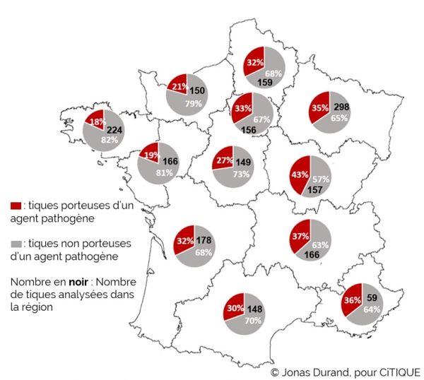 Carte de France, par région, des tiques infectées ou non par un agent pathogène