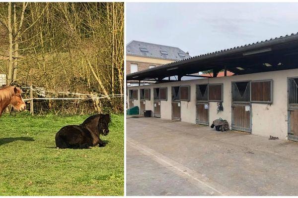 En l'absence de cours d'équitation ou de propriétaires pour les travailler, les pensions et centres équestres s'organisent pour sortir les chevaux.