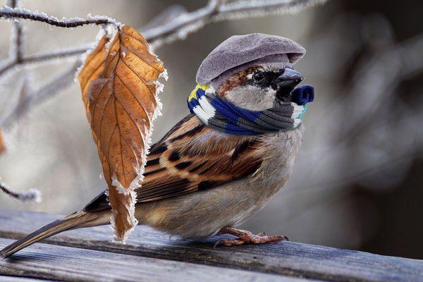 On ressort les doudounes en plumes
