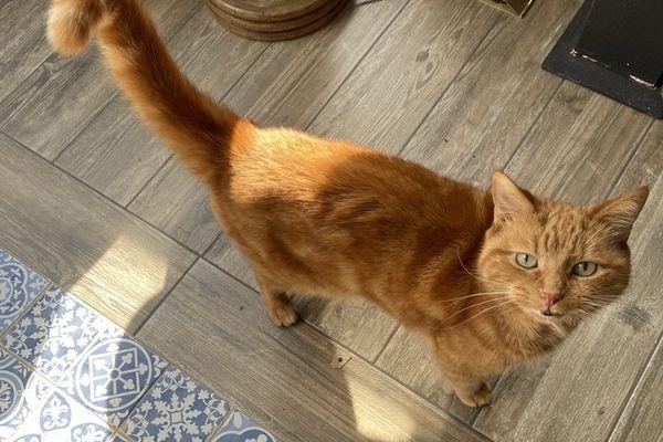 Le chat Charlie a disparu depuis le 20 juillet.