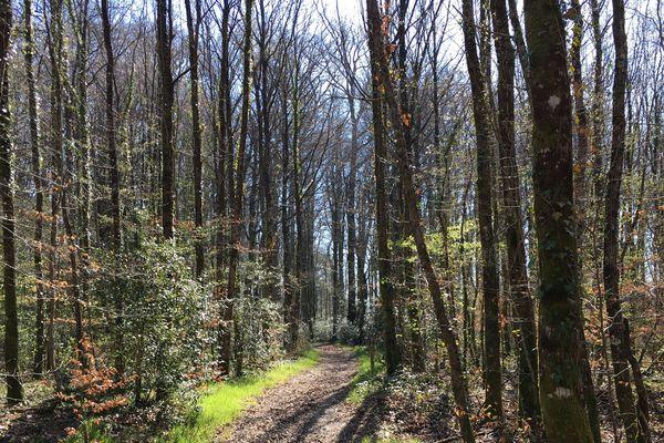 La forêt influe sur la qualité de l'air, de l'eau, du sol. Elle est indispensable également à la vie des hommes.