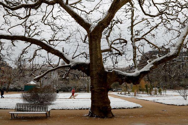 Le jardin des plantes sous la neige à Paris.